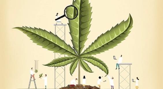Наркозависимость марихуана статья ук за марихуану